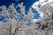Steamboat Winter Photo Tours