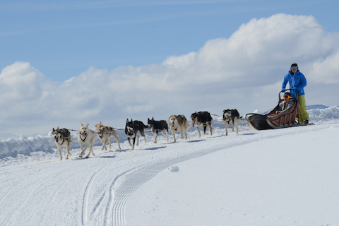 Steamboat Dog Sledding